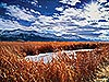 Red Reeds - White Mountains, CA Carmichael Productions, Inc. Landscape